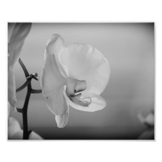 White Orchid - B&W Photograph