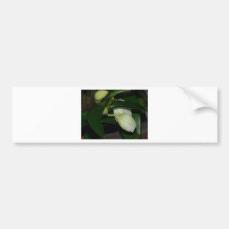 White Orchid Buds Bumper Sticker