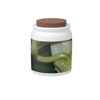 White Orchid Buds Candy Jars