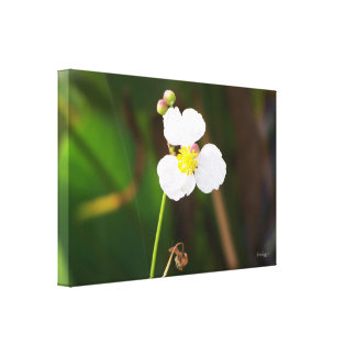 White Orchid by JanLynn Canvas Print