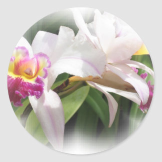 White Orchid Cards Classic Round Sticker