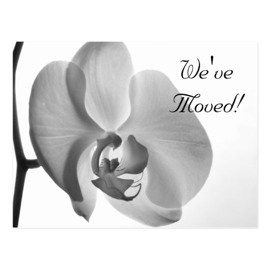 White Orchid Change of Address Postcard