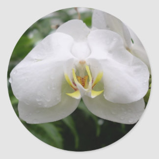 White Orchid Classic Round Sticker