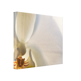 White Orchid Close Up Wrapped Canvas Print