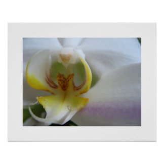 White Orchid Clouds Phalaenopsis Poster Art Print
