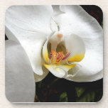 White Orchid flower Drink Coasters