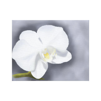White Orchid flower Professional Wrapped Canvas