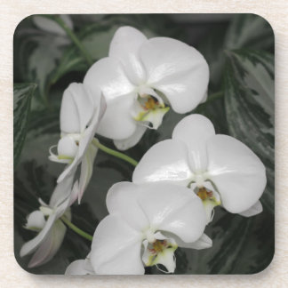 White Orchid flowers Beverage Coaster