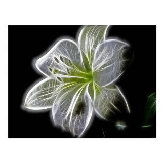 White Orchid Fractal On Black Postcard