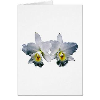 White Orchid Hawaiian Wedding Song Card