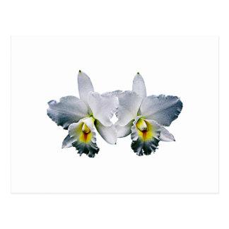 White Orchid Hawaiian Wedding Song Postcard