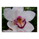 White Orchid I Beautiful Tropical Flower Card