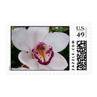 White Orchid I Stamp