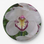White Orchid II Elegant Floral Paper Plate