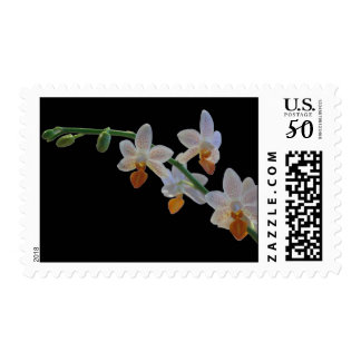 White Orchid in Bloom Postage
