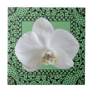 White Orchid in Hand-drawn Frame Tile