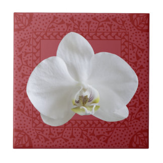 White Orchid in Red Hand-drawn Frame Tile