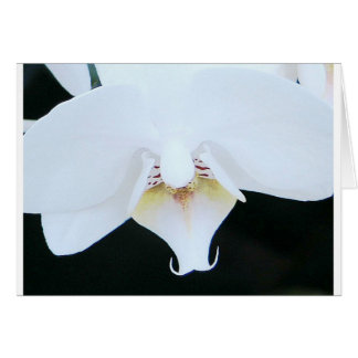 white orchid love birds card