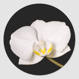 White Orchid On Black Classic Round Sticker
