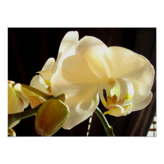 White Orchid Perfection Posters