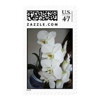 White Orchid Postage Stamp