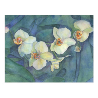 White orchid postcard
