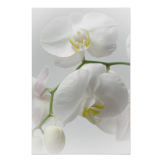 White orchid print