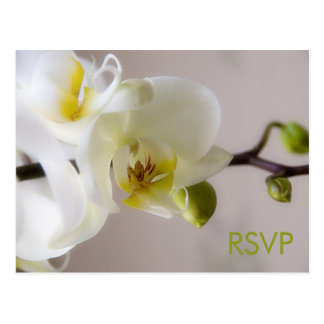 White Orchid • RSVP Postcard