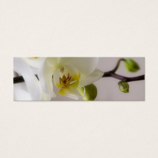 White Orchid • Save the Date Mini Card