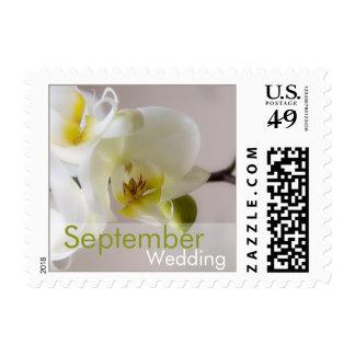 White Orchid • September Wedding Stamp