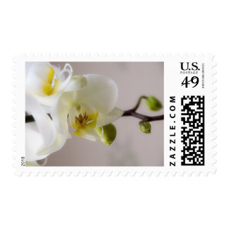 White Orchid • Stamp