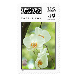 White Orchid  Stamp