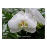 White orchid sympathy greeting card