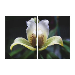 White Orchid Triptych Wall Art