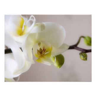 White Orchid • Wedding Invitation RSVP