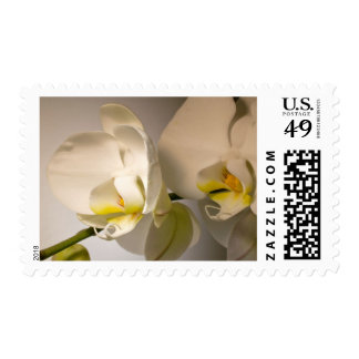 White Orchid Wedding Invitation RSVP Save The Date Postage