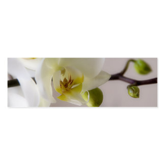 White Orchid • Wedding Website Profile Card Double-Sided Mini Business Cards (Pack Of 20)