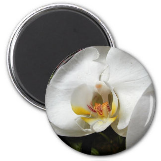White Orchids 2 Inch Round Magnet