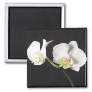 White Orchids 2 Inch Square Magnet