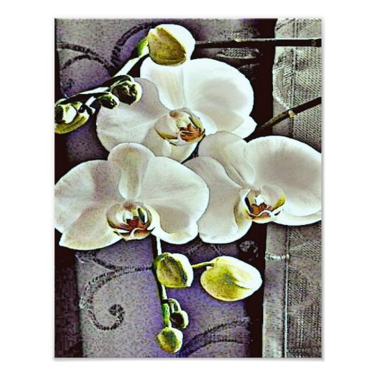 White Orchids and Denim Photo Print