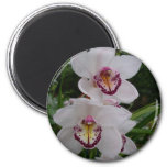 White Orchids Beautiful Tropical Flowers Magnet