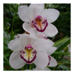 White Orchids Beautiful Tropical Flowers Poster