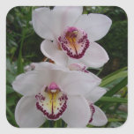 White Orchids Beautiful Tropical Flowers Square Sticker
