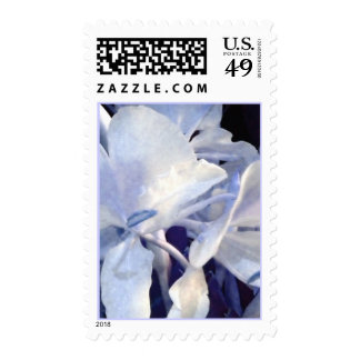 White orchids, blue light stamps