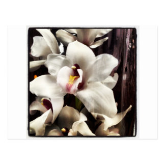 White Orchids by Debuxos Postcard