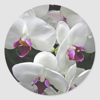 White Orchids Classic Round Sticker