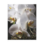 White Orchids Gallery Wrapped Canvas