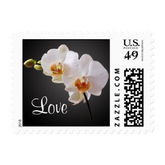White Orchids Love Postage