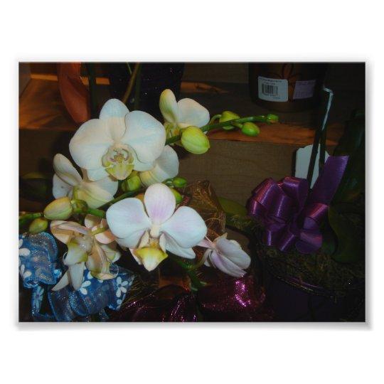 White Orchids Photo Print
