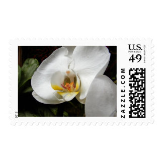 White Orchids Postage Stamp